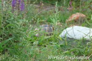 Schildkrötengehege_4