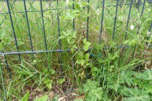 Gartengrenze-vorher