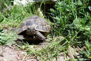 Schildkröte_2