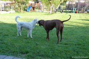 Cleo und ihr neuer Freund Neo