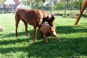 Cleo und ihr alter Freund Stubbs