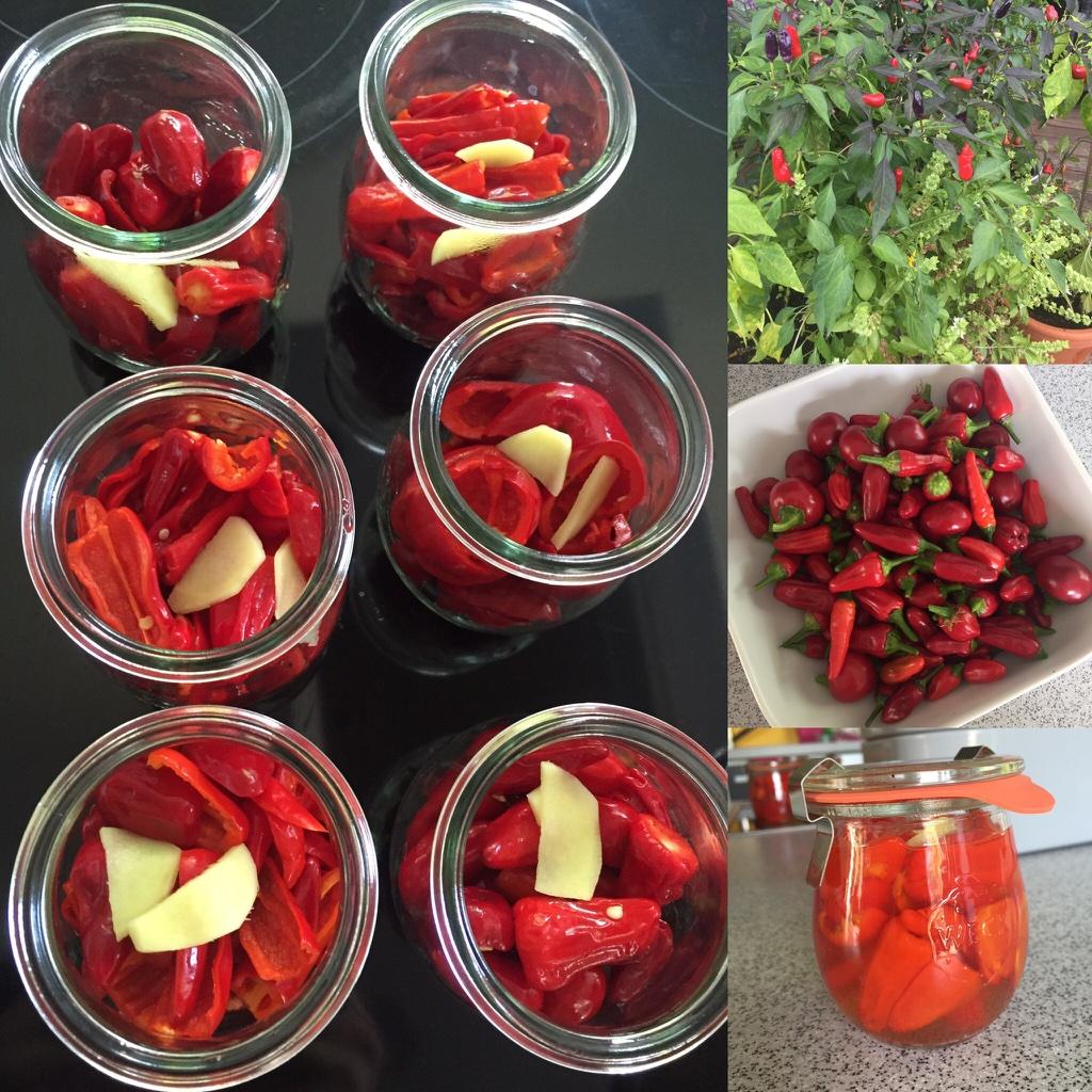 Chilis haltbar machen – heute mal eingelegt