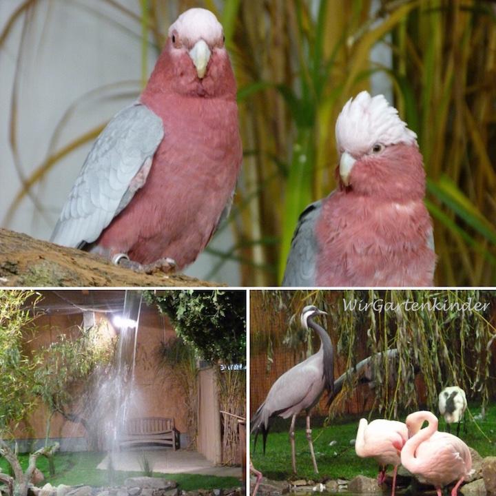 Vogelschau 2016 – Begeisterung für Artenschutz