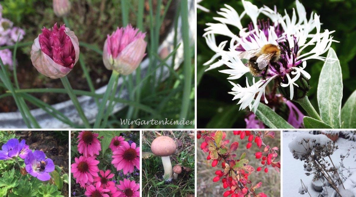 Das Gartenjahr – Rückblick, Ausblick und eine neue Serie