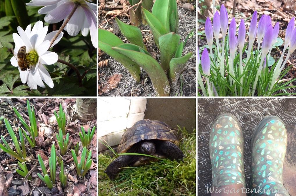 Gartenmonat März – jetzt wird es Frühling